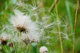 picture of fragile  - Fluffy flowers in calm weather - JPG