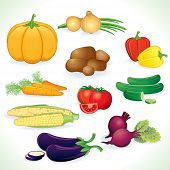 Vegetables - juicy pumpkin, tomatoes, pepper, cucumbers, onions, corns - set of detailed vector illu