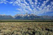 stock photo of sagebrush  - Grand Teton National Park - JPG