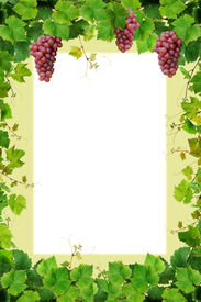 foto of wine grapes  - Grapevine frame with pink grapes - JPG