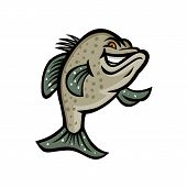 Mascot Icon Illustration Of A Crappie, Croppie, Papermouths, Strawberry Bass, Speckled Bass, Specks, poster
