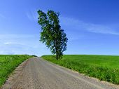 Isolated Tree Besides Dust Country Road With Contrasting Blue Sky And Green Fields. poster