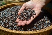 Coffee Beans Background. Coffee Beans In Basket. Coffee Beans In The Right Hand. poster