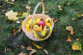 Basket With Fresh Sweet Apples On Green Grass.juicy Apples In Basket.autumn Harvest Of Apples. Just  poster