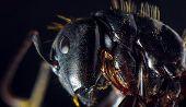 Extreme Closeup Macro Black Carpenter Ant For Pest Extermination poster