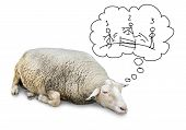 stock photo of counting sheep  - Funny concept of cute sheep with lots of wool isolated on white counting hand drawn human stickfigures jumping over a fence to fall asleep - JPG