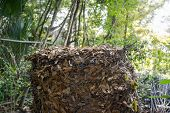 stock photo of chicken-wire  - Compost heap consisting of live oak leaves in a chicken wire enclosure outdoors - JPG