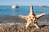 Starfish on the beach and blurred motorboat in the background