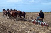 stock photo of horse plowing  - An Oldtimer Ploughing the Field with a Six Horse Team of Clydesdales - JPG