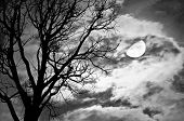 stock photo of freaky  - Silhouette of dead Tree against moon and clouds in a cloudy night  - JPG