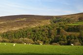 stock photo of hollow  - Hollow Combe on the Dunkery Hill Exmoor - JPG