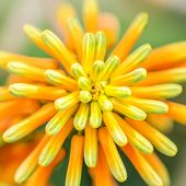 picture of rare flowers  - Orange Green Atom Flower Plant Nature Macro - JPG