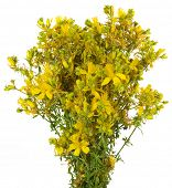stock photo of klamath  - Bouquet St John - JPG