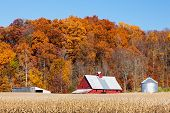 foto of farm land  - Farm land with a crop of corn and a bright red barn is backed by a hillside full of trees with vibrant and colorful autumn foliage - JPG