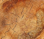 foto of sawing  - Texture saw cut of the wood logs closeup - JPG