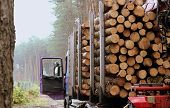stock photo of logging truck  - Haulage timber in the forest - timber industry