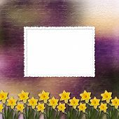 pic of narcissi  - Card for invitation or congratulation with bunch of flower - JPG