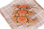 picture of cooked crab  - Cooked crab - JPG