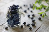 stock photo of food crops  - Blueberry antioxidant organic superfood in a jar concept for healthy eating and nutrition - JPG