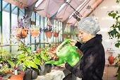 stock photo of small-flower  - Portrait of florists woman working with flowers in a greenhouse holding a watering can in her hand. Small business owner.