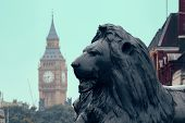 picture of big-ben  - Trafalgar Square lion statue and Big Ben in London - JPG