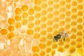 stock photo of honeycomb  - Working bee on yellow honey wax honeycomb - JPG