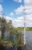 picture of pontoon boat  - Swamp travel tour Florida on pontoon boat - JPG