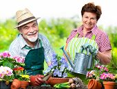 foto of horticulture  - Portrait of senior couple in the flower garden - JPG