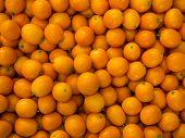 picture of kumquat  - A pile of kumquat - JPG