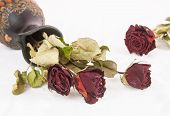 stock photo of keepsake  - Withered dry red rose flowers and jug - JPG