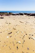 pic of deserted island  - Shells on the sand at Red Rocks Beach Phillip Island - JPG