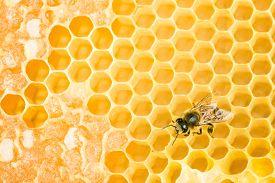 foto of honeycomb  - Working bee on yellow honey wax honeycomb - JPG