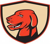 picture of labradors  - Illustration of a labrador golden retriever dog head viewed from the side set inside shield crest on isolated background done in retro style - JPG