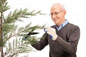 stock photo of tree trim  - Cheerful senior man trimming the branches of a coniferous tree and smiling isolated on white background - JPG