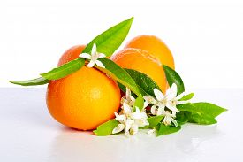 pic of mandarin orange  - Oranges with orange blossom flowers in spring on white background - JPG