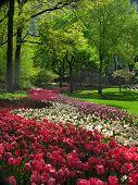 Постер, плакат: Весна в центральном парке