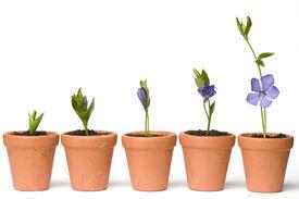 pic of flower pot  - Flower development - JPG