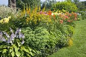 Backyard perennial garden containing late summer flowering perennials.