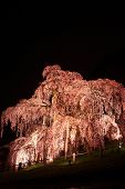 picture of fukushima  - Illuminated cherry tree Nema is MiharuTakizakura Fukushima Japan - JPG