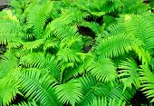 foto of photosynthesis  - A fern on a full background. A green fern leaves.