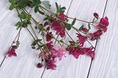 picture of columbine  - Bouquet of purple flowers columbine on the wooden table - JPG