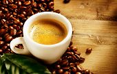 foto of coffee coffee plant  - Coffee - JPG