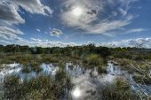 stock photo of marshlands  - Scenic landscape in the Florida Everglades National Park during the winter - JPG
