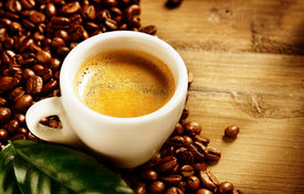 pic of coffee coffee plant  - Coffee - JPG