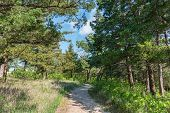 image of kansas  - Trail through the woods Strong City Kansas - JPG