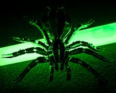 foto of radioactive  - A conceptual image of toxic and radioactive spider - JPG