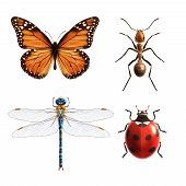 foto of insect  - Insects realistic colored decorative icons set with ladybug dragonfly ant butterfly isolated vector illustration - JPG