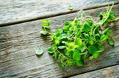stock photo of oregano  - oregano on a dark wood background - JPG