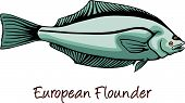 picture of flounder  - European Flounder or Platichthys flesus color iIllustration - JPG