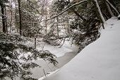 image of blanket snow  - Wilderness stream and forest blanketed in fresh fallen snow - JPG